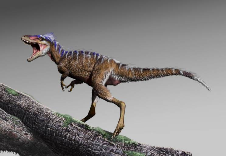 Tiny Fossil discovered in 2020 is a new type of lizard species like a million-year-old dinosaur