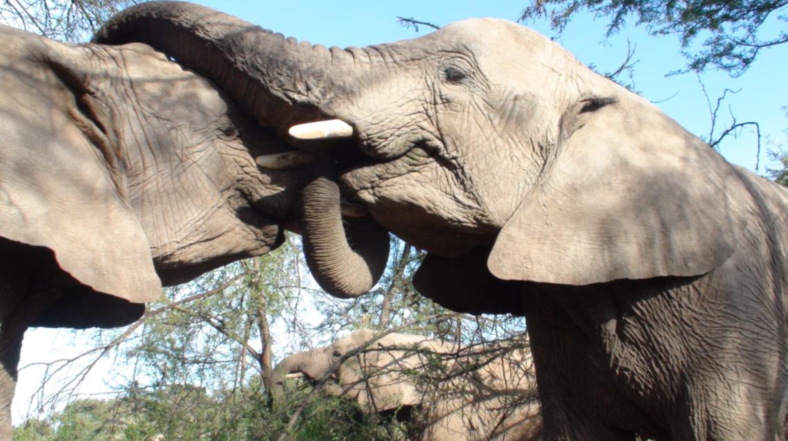 World Elephant Day 2021 Theme